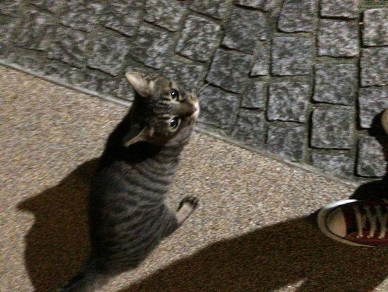 キジトラ 夜ねこ 最近実は 走り猫 は長く続かないwwww