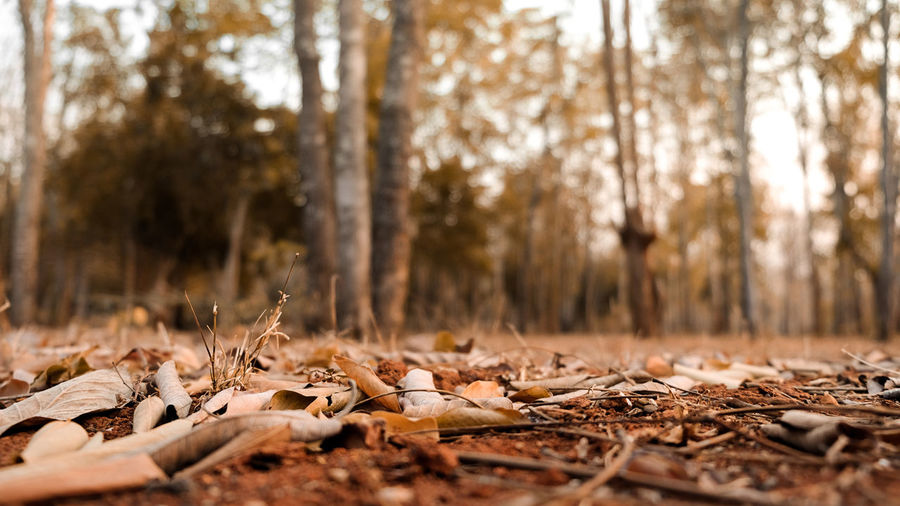 Surface level of dry leaves on field in forest