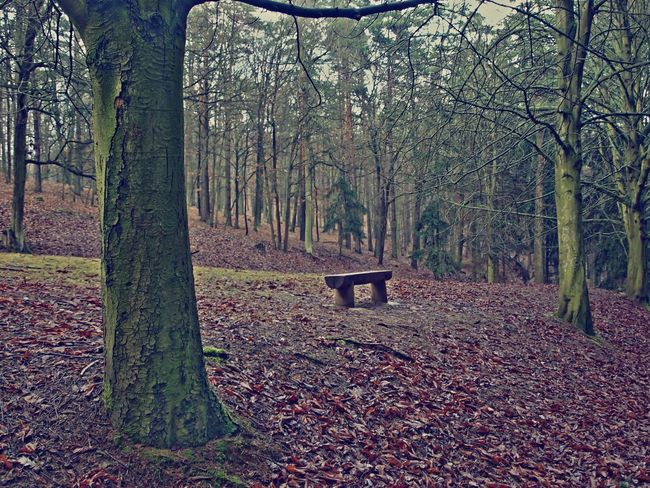 Sit-down in early winter. Holedna enclosure, Brno, Czech republic Czech Republic Czech Brno Bench Calm Tranquility Bare Tree Bare Trees Forest Nature No People Outdoors Serene Serene Outdoors Tranquil Scene Tranquility Tree Tree Trunk