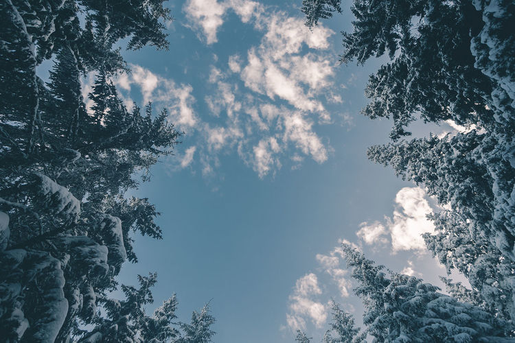 Beauty In Nature Branch Cloud - Sky Cold Temperature Coniferous Tree Day Directly Below Growth Idyllic Low Angle View Nature No People Outdoors Plant Scenics - Nature Silhouette Sky Tranquil Scene Tranquility Tree Tree Canopy  Winter