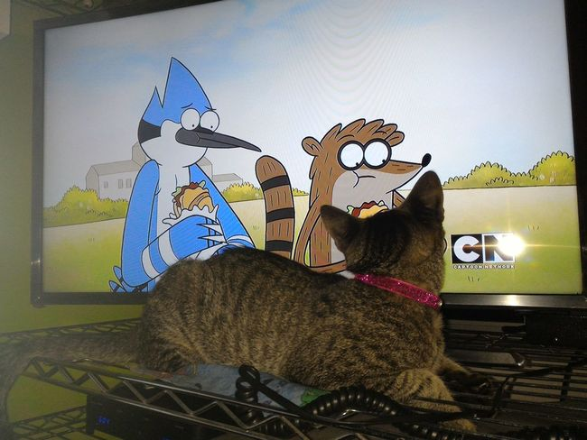 Sou fã! Pet I Love My Cat ❤ Regular Show