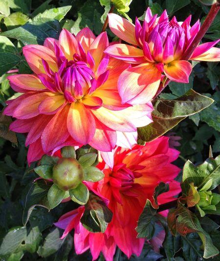 beauty Flowerporn