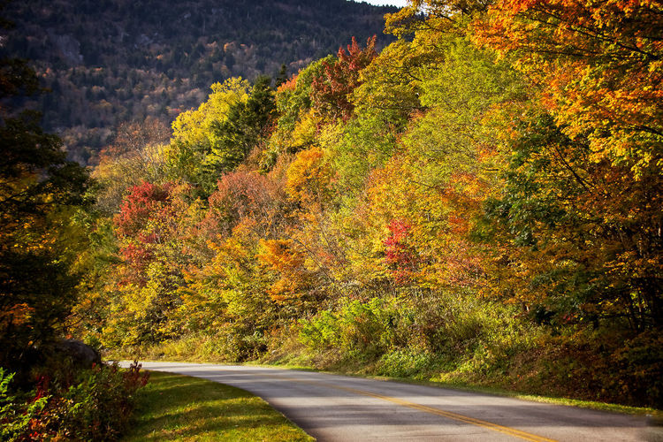 Fall Road Trip Fall Colors Fall Road Trip Autumn Beauty In Nature Change Day Growth Leaf Nature No People Outdoors Road Scenics Tranquility Tree