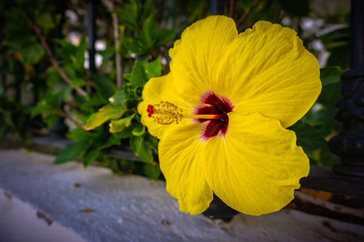 Flower SPAIN