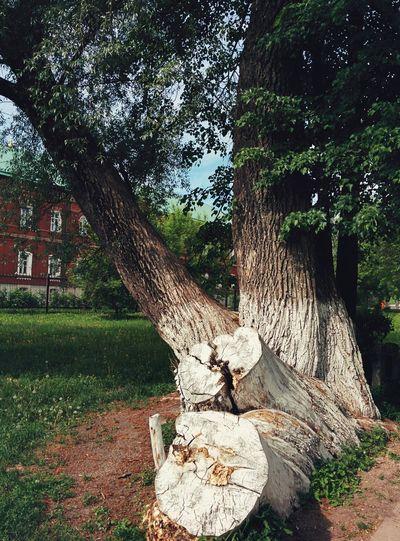 Tree trunk on grass