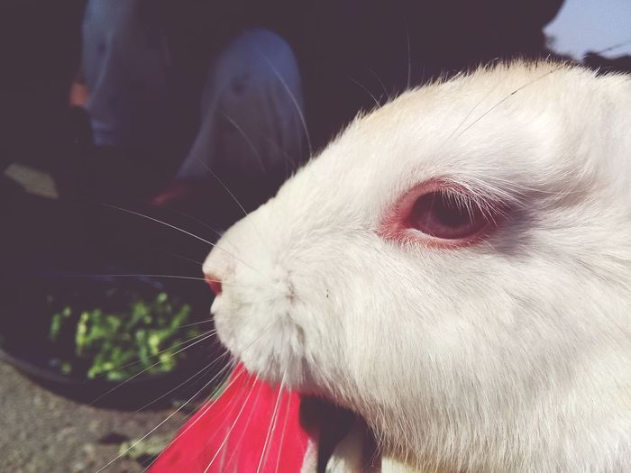 Rabbit red eyes Domestic Animals Pets One Animal Animal Themes Animal Close-up Morning Shots Mammal Dog Water Day Indoors  People Vet
