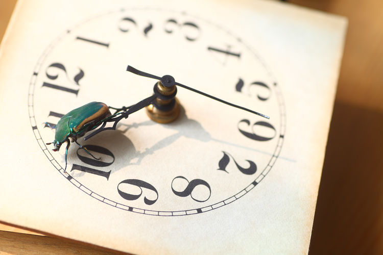 Vintage clock face with green beetle No People Indoors  Close-up Instrument Of Time Clock Face Circle Beetle Insect Shield Bug Animal Entomology Concept Numbers Green Textures Clock Hands Studio Shot Natural Light Shadows Sunlight Resting