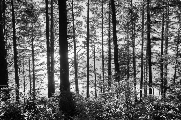 Beyond Full Frame Reimerpics Landscape Travel Photography Black And White Photography Travel Photography Beauty In Nature Juandefuca Chinabeach British Columbia Vancouver Island Canada Forest Photography Trees Ocean