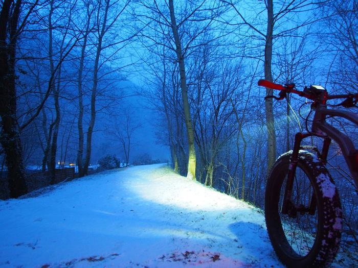 Bare Tree Beam Bike Cold Temperature Day Fatbike Headlight Land Vehicle Nature No People Outdoors Path Snow Transportation Tree Weather Winter