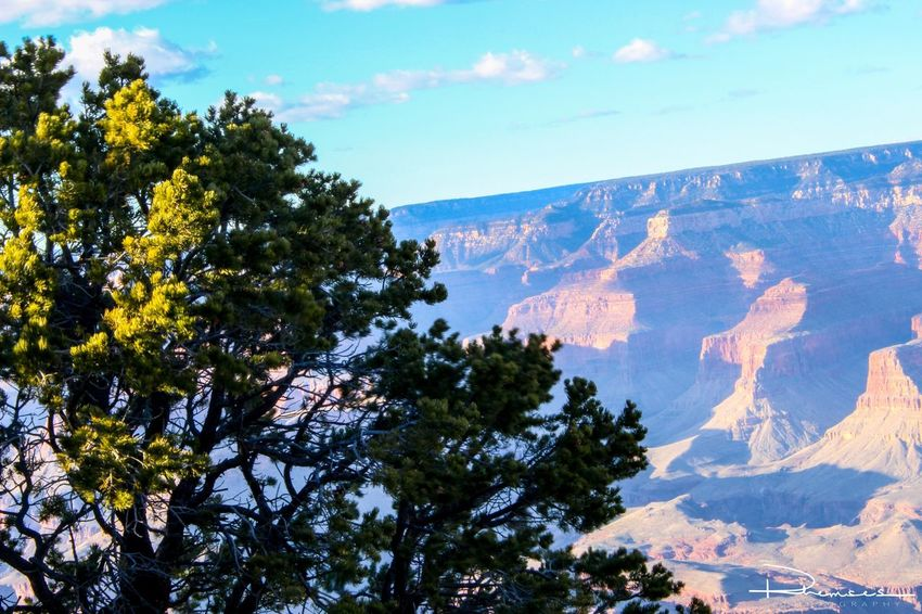 Tree on the edge. Nature Picture Landscape Photo Photography Photooftheday Photographer Picoftheday Photograph Rhemses Scenery Canon Arizona Grandcanyon Colors Natgeo Travel