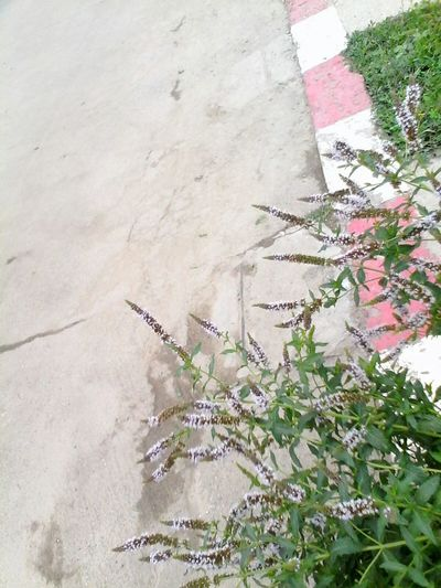 @wolfzuachis Showcase: 2016 Eyeemphoto Street 2016 Wolfzuachis Ionitaveronica Eyeem Market Road Outdoors Street Photography No People Green Day Nature Plant Beauty In Nature Side Road Mint Blossom Mint In Bloom Mint Plants Blossom Blooming Enhanced