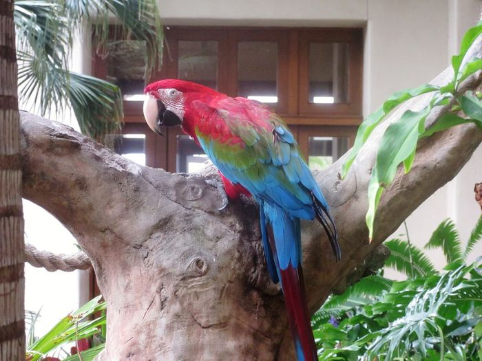Red & Green Macaw Backgrounds Tree Feathers Feathers Of A Bird Birds Of EyeEm  Bird Photography Bird Beak Beauty In Nature Macaw Bird Perching Tree Parrot Branch Red Multi Colored Animals In Captivity Captivity