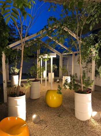 Garden Photography Garden Plant Tree Nature No People Architecture Built Structure Decoration Illuminated Potted Plant Table Growth Candle Lighting Equipment Outdoors Sunlight Yellow Luxury Flower Furniture
