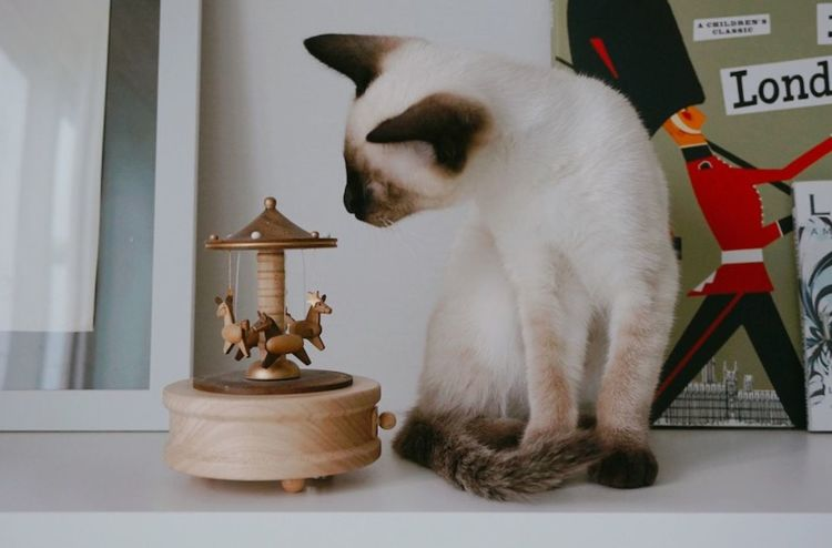 Cat Cat♡ Cat Lovers Musicbox Cute Cute Cats Cute Pets