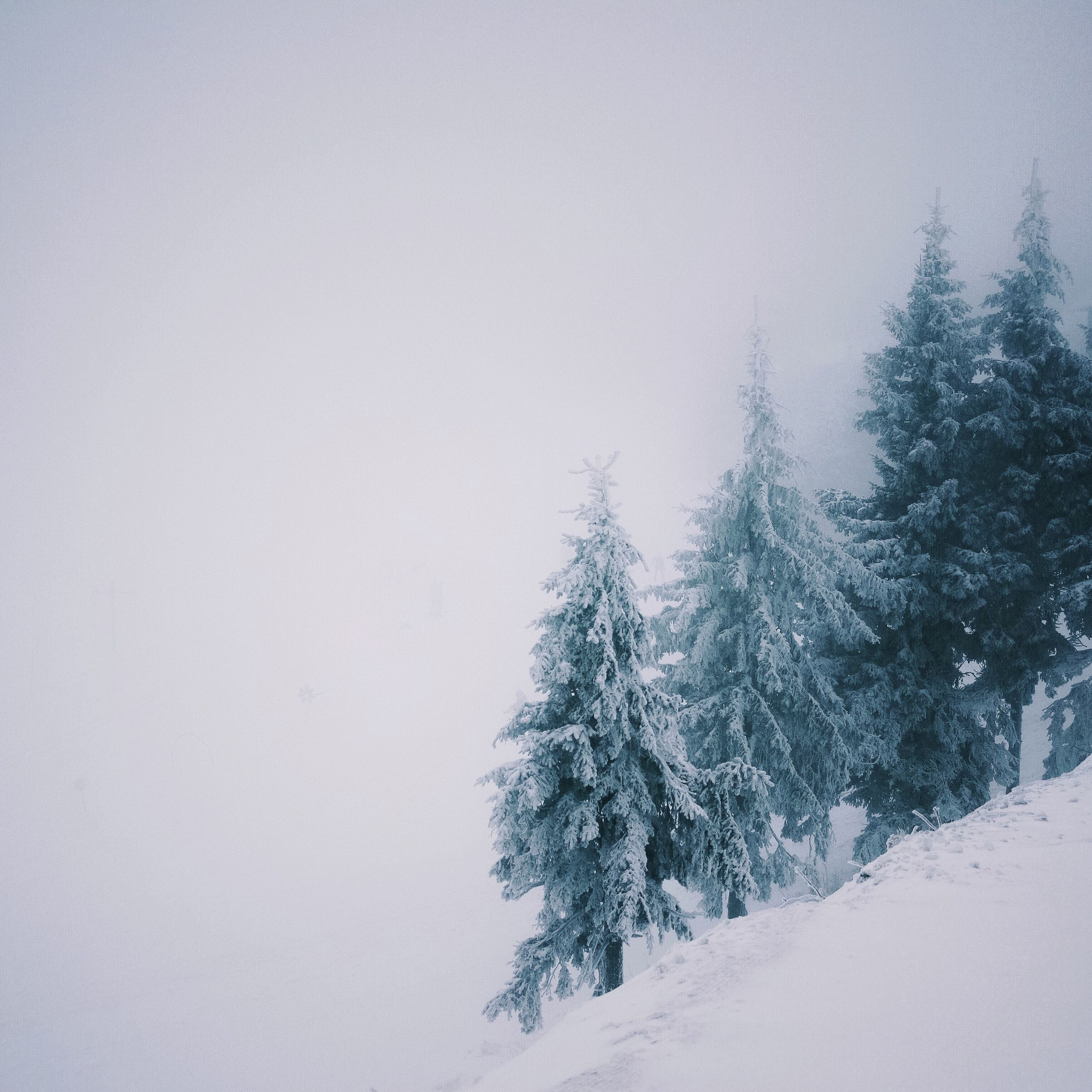 winter, snow, cold temperature, weather, tree, season, clear sky, tranquility, tranquil scene, copy space, nature, beauty in nature, covering, scenics, landscape, frozen, sky, bare tree, white color