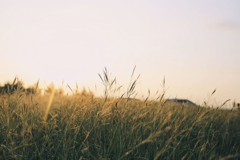 Nature Growth Field Rural Scene Cereal Plant Tranquil Scene Outdoors Agriculture No People Tranquility Close-up Plant Landscape Grass Wheat Day Beauty In Nature Sky