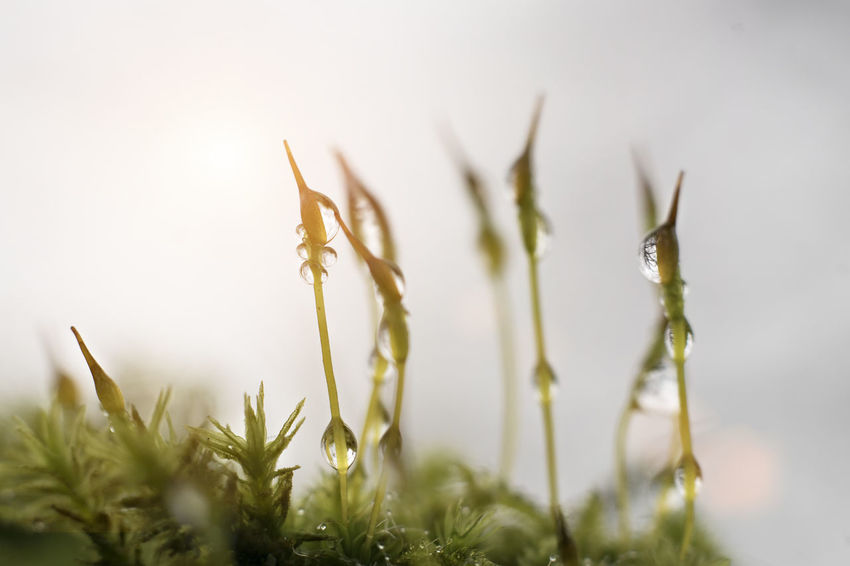 drop Taking Photos Taking Pictures Eye4photography  Macro Photography Macro Plant Growth Nature Outdoors Close-up No People Day Grass Defocused Beauty In Nature Freshness