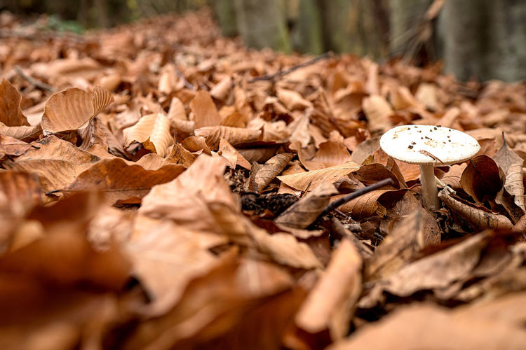 Close-up of dry autumn leaves on ground
