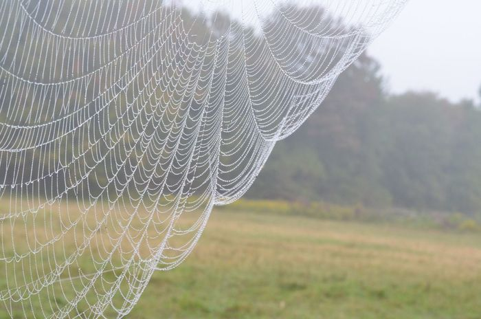 Spiderweb, fog, dew drops, nature Perspectives On Nature