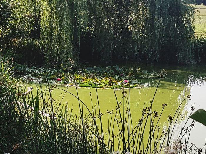 searoses Water