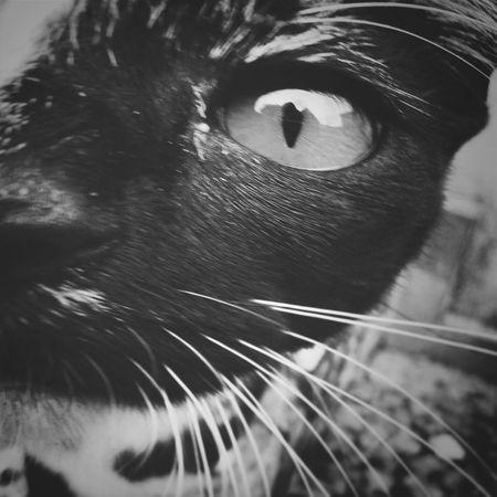 Cats Gatos Eye Olho