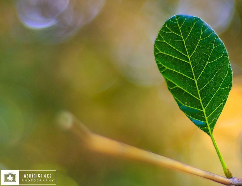 Beautiful Nature Nature EyeEm Best Shots AsDigiClicks Love