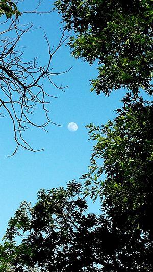 Moon Against