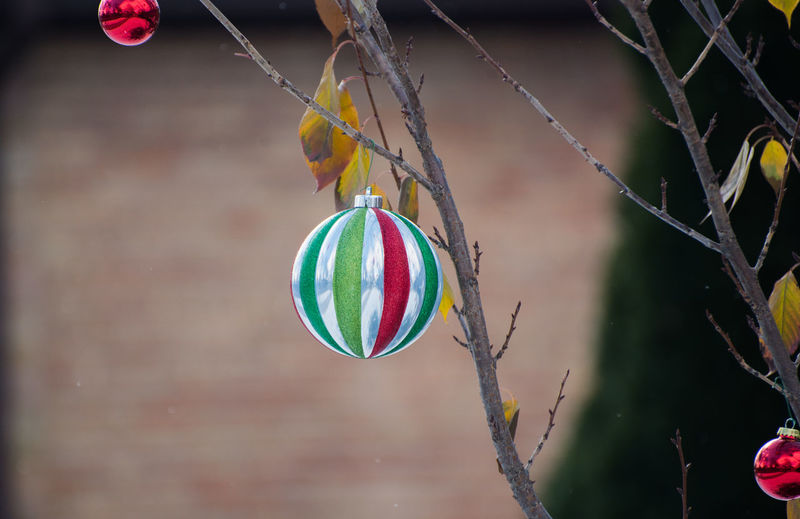Close-up Day Focus On Foreground Hanging Holiday - Event Multi Colored No People Outdoors Tree