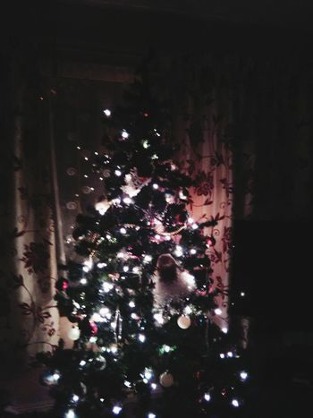 Xmas Tree Xmas🎄 Xmas Decorations Xmaslights EyeEm Xplosive Xmas Merry Xmas! Xmas Everywhere EyeEm EyeEm Gallery Beauiful Hi! Xmas2015