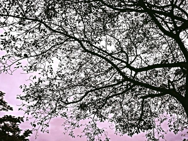 Check This Out Tree And Sky Hello World Enjoying Life Walking Around From My Point Of View For The Love Of Trees ~ Natural Beauty Silouhette GraphicARTphoto