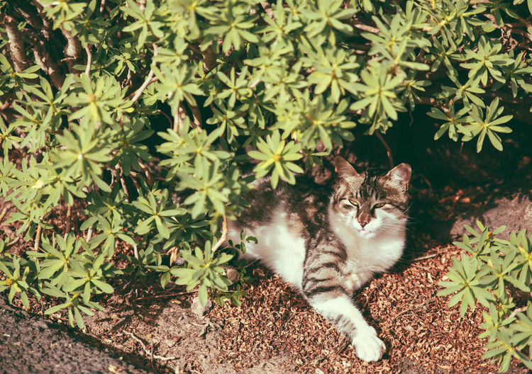 High Angle View Of Cat Resting By Plants