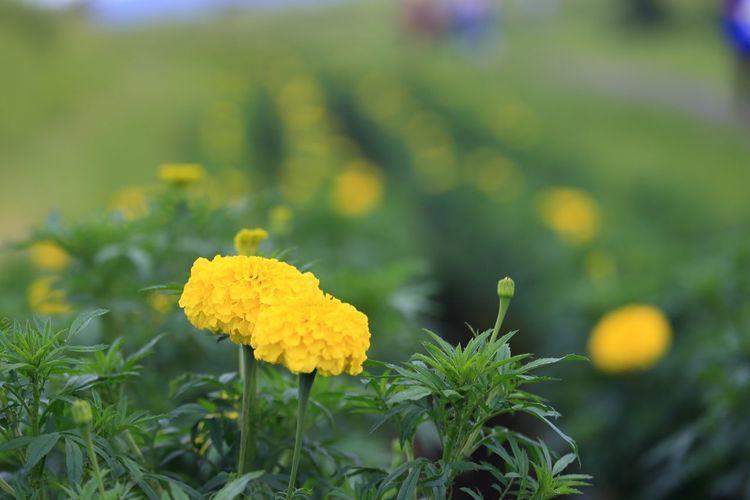 黄色い花♪(*^^)/