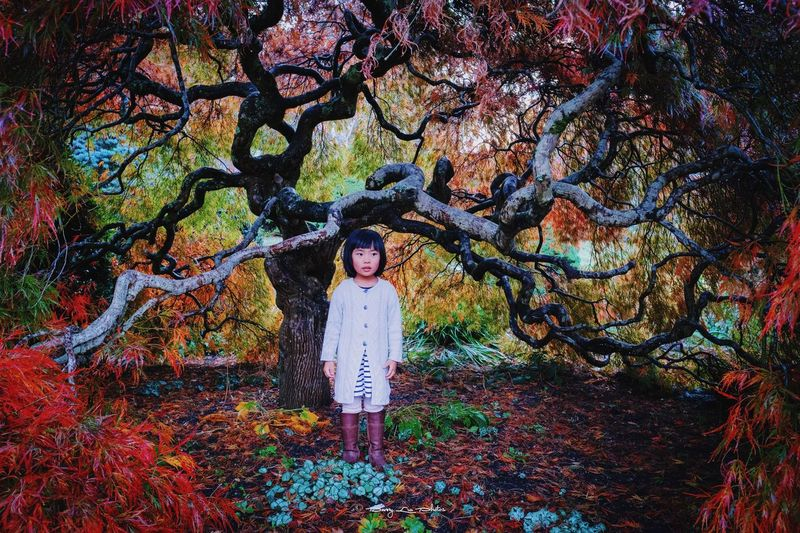 Mia in Autumn Red Leaves Red Mood Gardens Dandenong  Autumn Creativity Real People Art And Craft Tree Plant One Person Multi Colored Child Childhood Nature Outdoors