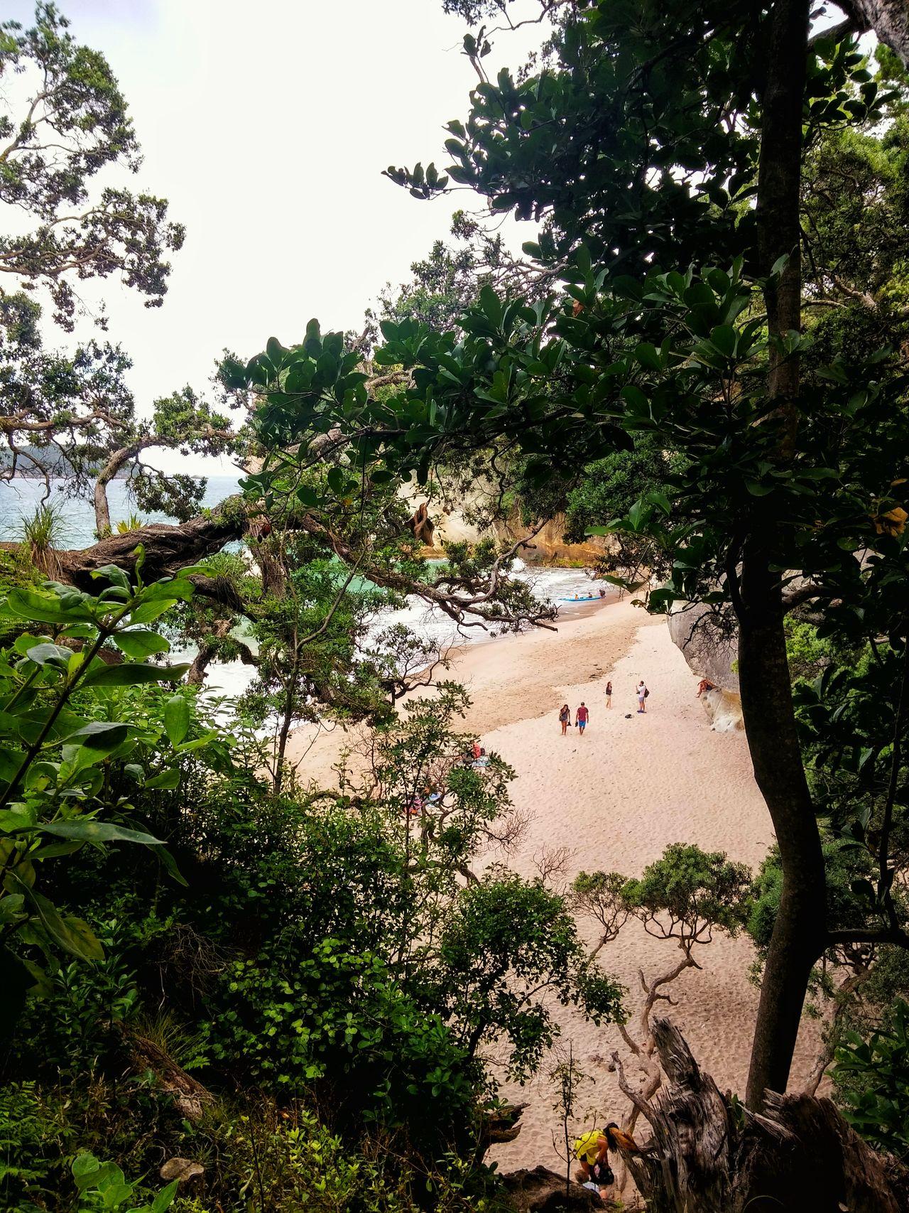 Coastal feature