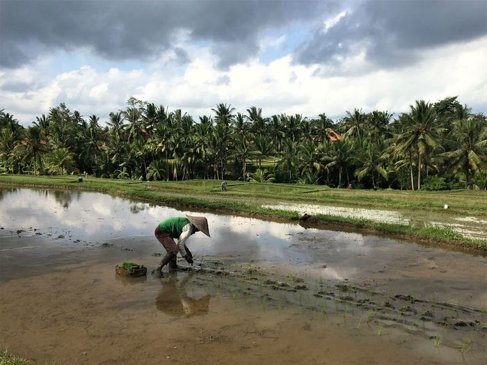 Hard work Water Cloud - Sky Plant Tree Palm Tree Sky Tropical Climate Reflection Nature Land Real People Beauty In Nature Rice Paddy Farmer Agriculture INDONESIA Rice Field Hat Working Hard Ubud Bali Rice Terraces Rural Scene Manual Worker EyeEmNewHere The Mobile Photographer - 2019 EyeEm Awards