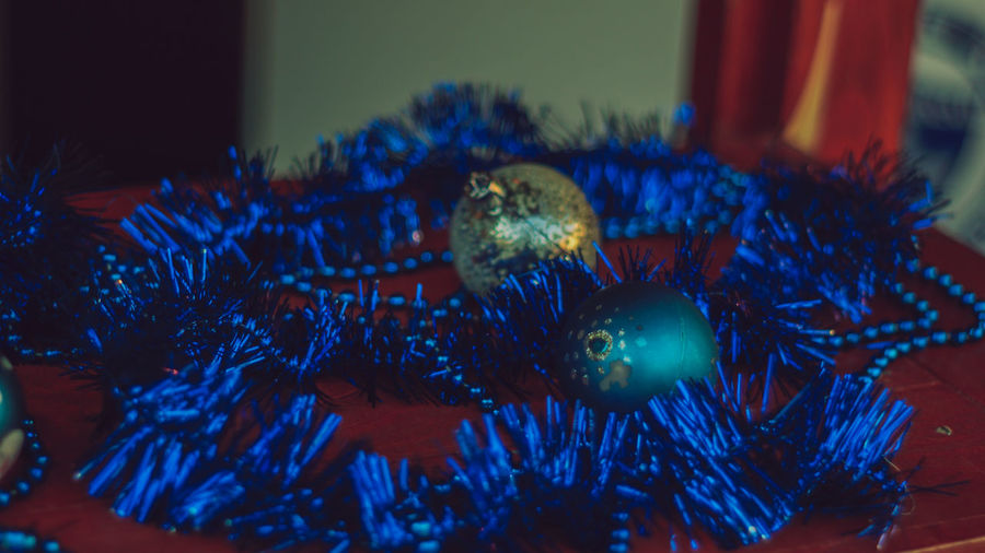 Close-up No People Indoors  Selective Focus Nature Animal Animal Wildlife Animal Themes Plant Christmas Animals In The Wild Decoration One Animal Focus On Foreground Blue Celebration christmas tree Holiday Water