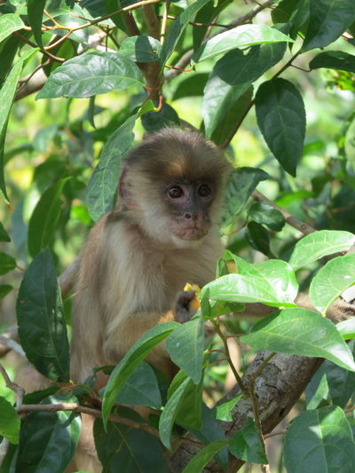 Amazon Amazon Monkey Amazon River Amazonas Animals In The Wild Beauty In Nature Mammal Monkey Nature At Its Best Nature Up Close One Animal Travel The World