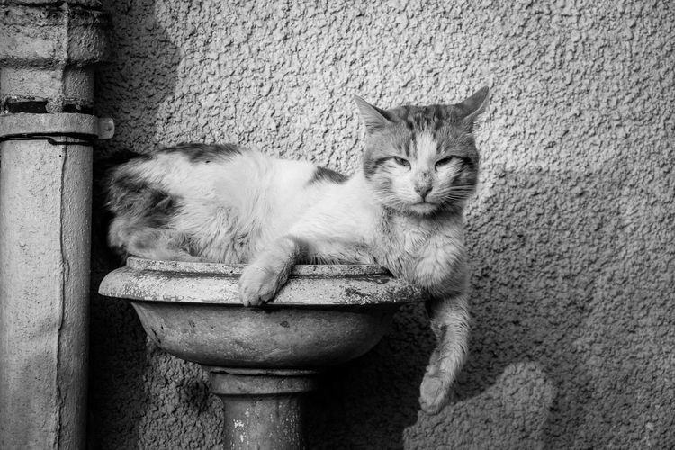Portrait Of Cat Sitting In Bird Bath Against Textured Wall