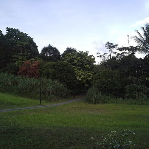 The wonders of nature you can find right behind your house! Singapore Sg ASIA Garden nature plants trees colours