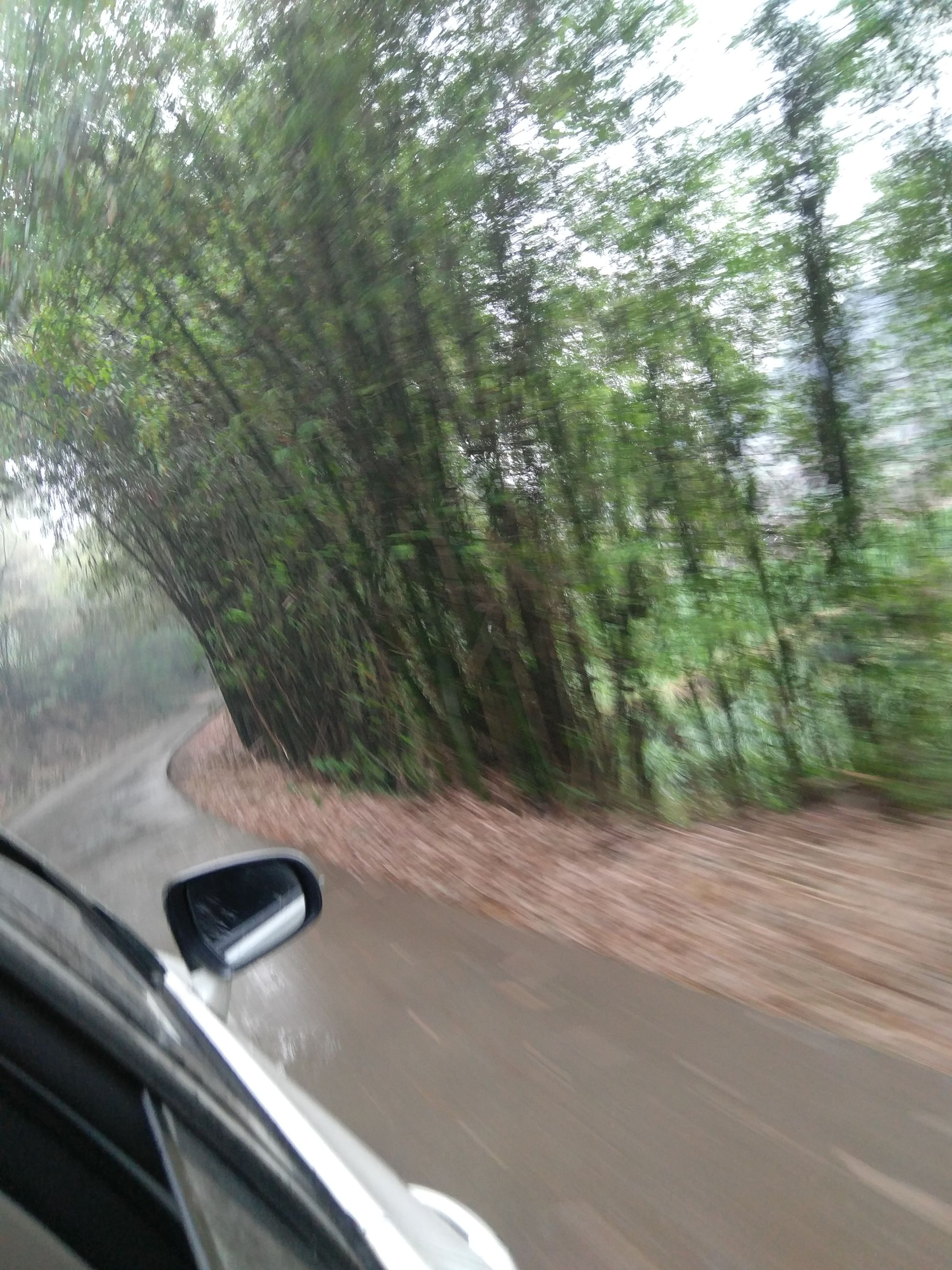 transportation, land vehicle, road, car, mode of transport, tree, day, blurred motion, no people, car point of view, windshield, window, motion, journey, car interior, nature, road trip, outdoors, close-up