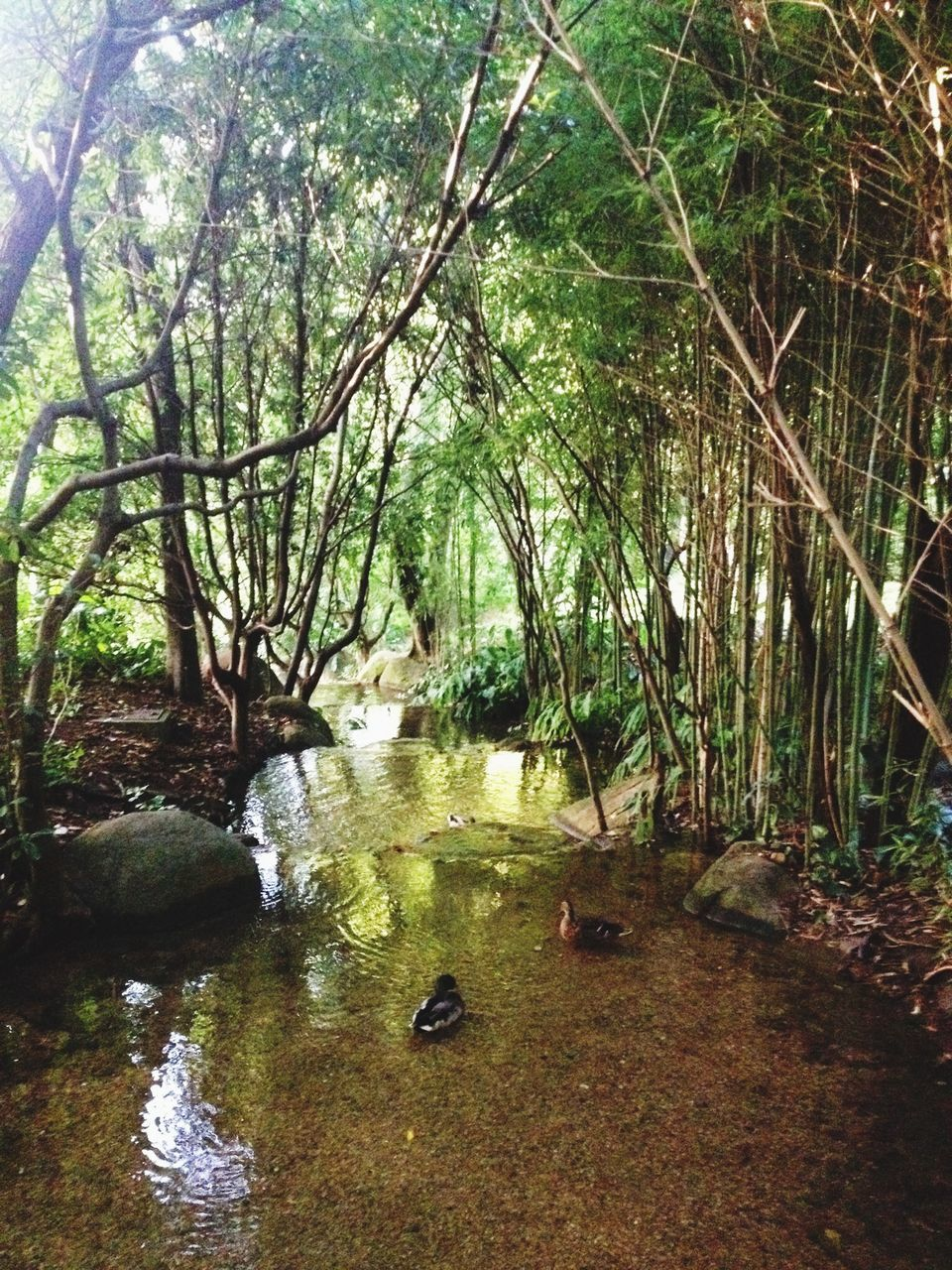 water, nature, tree, tranquility, no people, tranquil scene, forest, beauty in nature, scenics, river, day, growth, outdoors, landscape, grass, branch, animal themes