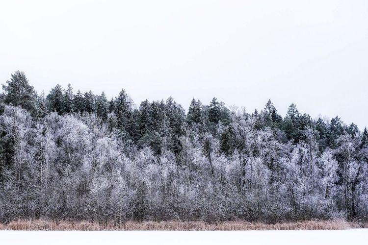 Lakeside Judarn, Stockholm EyeEm Stockholm Fujifilm_xseries Winter Stockholm Winter Nature Lake Judarn åkeshov Bromma