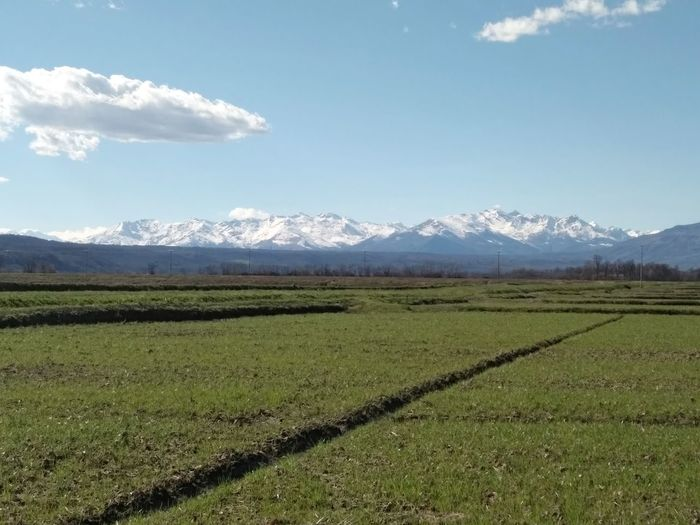 montagne Biellesi Biellese Risaie Prealpi Biellesi Biellese. Tea Crop Mountain Irrigation Equipment Tree Rural Scene Agriculture Springtime Field Crop  Farm Cultivated Land Rice - Cereal Plant Rice Paddy Agricultural Field