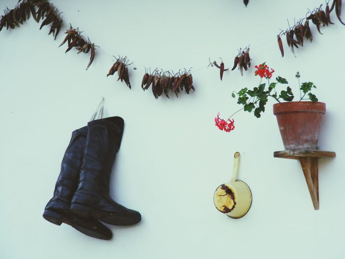 Close-up of boots by potted plant on wall