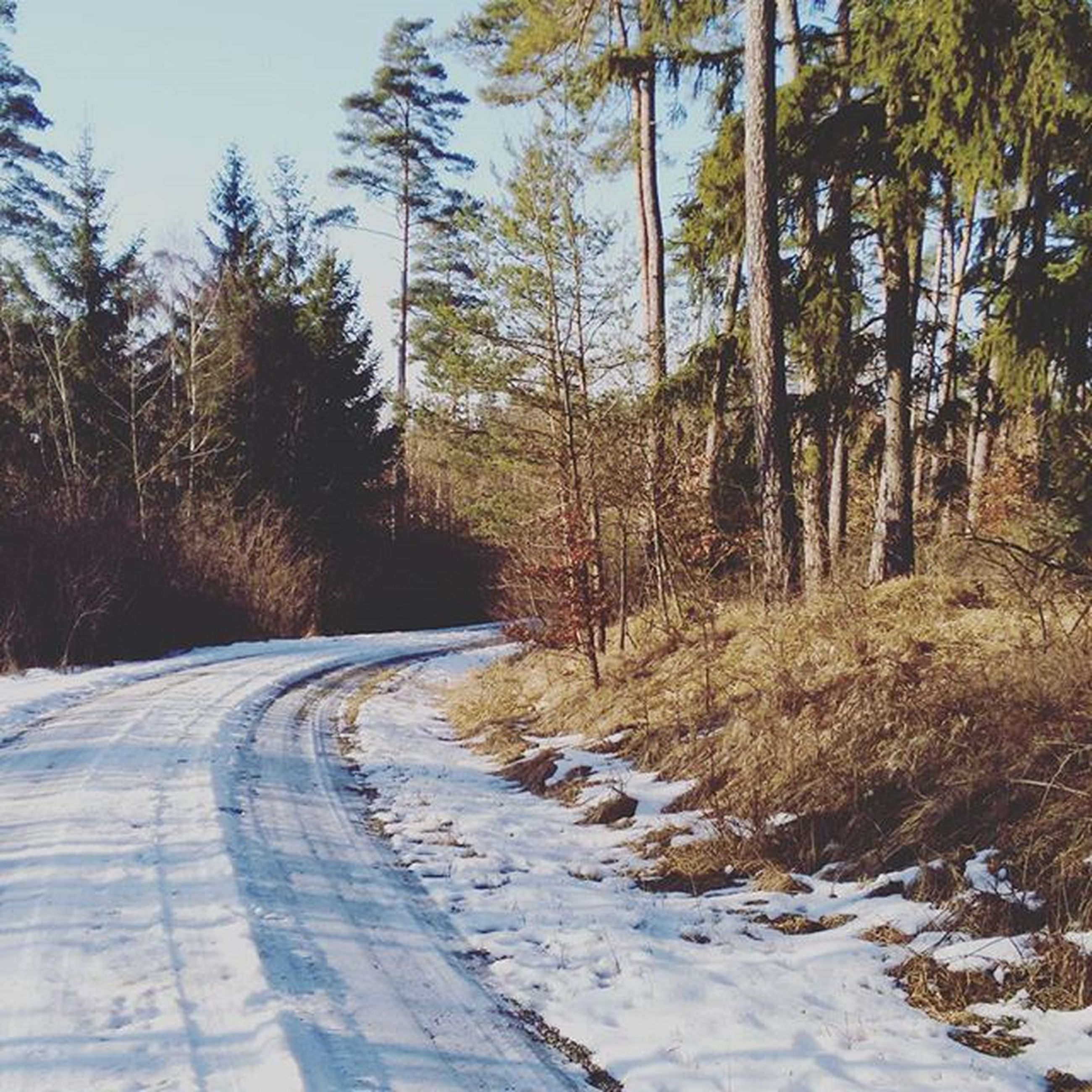 the way forward, transportation, tree, road, diminishing perspective, vanishing point, empty road, country road, snow, nature, tranquility, tranquil scene, forest, dirt road, outdoors, street, non-urban scene, no people, sky, winter