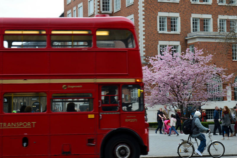 Yes, London. You know, fish, chips, cup o tea, bad food, worse weather. Red Architecture Transportation City Built Structure Building Exterior Tree Land Vehicle Plant Street Day Mode Of Transportation Incidental People Flower Nature Outdoors Real People Public Transportation Bus Flowering Plant Springtime Double-decker Bus Cherry Tree Cherry Blossom London