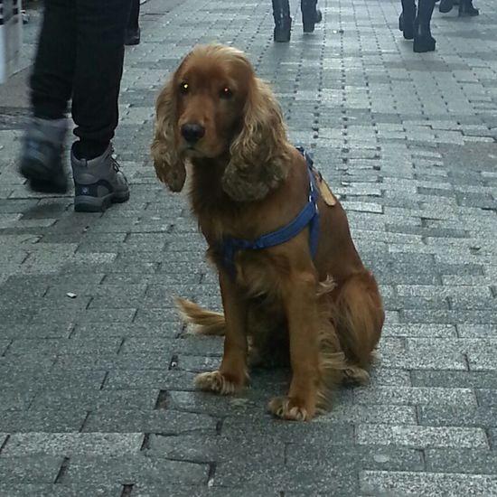 Dog Cocker Köpek PhotoByMuratGul