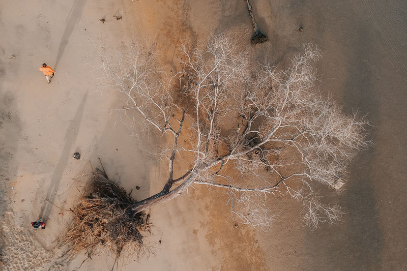the death of tree aerial view High Angle View No People Nature Day Tree Plant Outdoors Land Wood - Material Dry Sand Tranquility Dirt Water Bare Tree Scenics - Nature Trunk Wall - Building Feature Climate Arid Climate