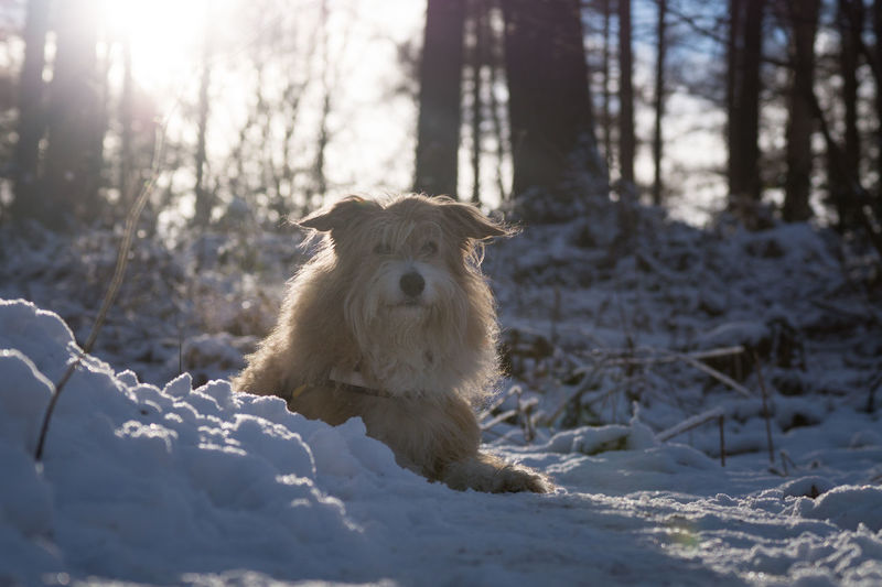 Winter Animal Themes Beauty In Nature Cold Cold Temperature Day Dog Domestic Animals Forest Mammal Nature No People One Animal Outdoors Pet Pets Portrait Snow Sunlight Tree Winter Wood - Material