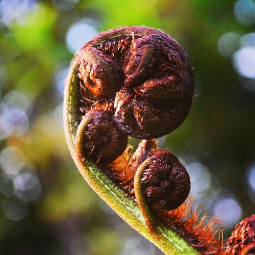 Aotearoa-Koru Native Plant Nature Close-up Growth Outdoors No People Beauty In Nature Plant Nature Mountain Adventure Captured The Moment Sea garden Water Leaf forestliving